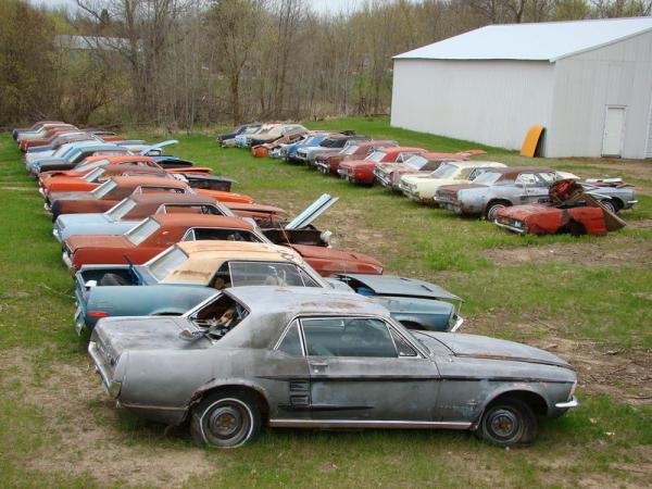 Lines Of Mustangs