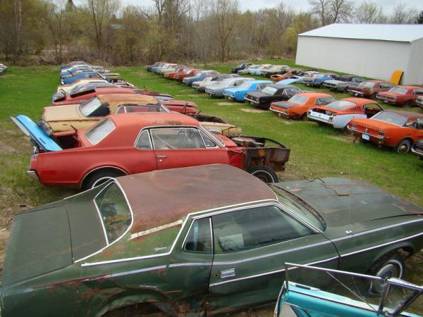 More Mustangs