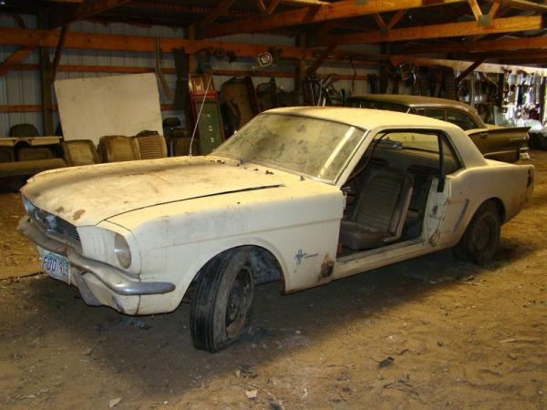 Mustang In A Barn