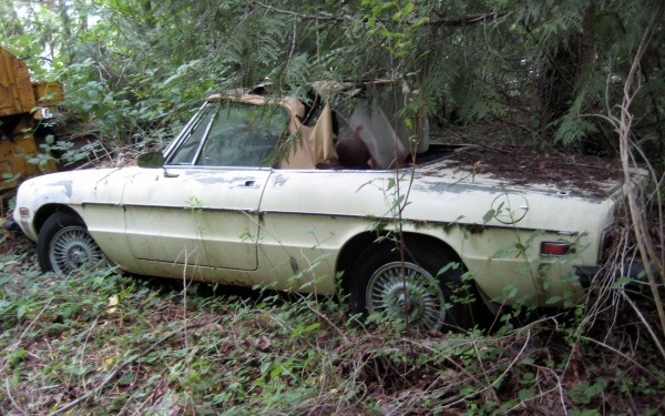 alfa-romeo-in-the-forest