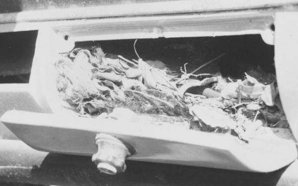 Ferrari rat nest