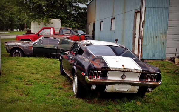 Mustang-sighting