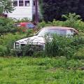 Upstate Corvette Graveyard 5