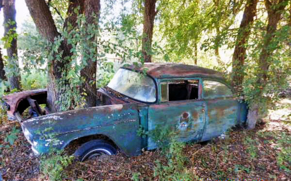 1955 Chevrolet Tree Find