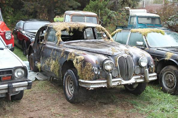 Moss Covered Jaguars