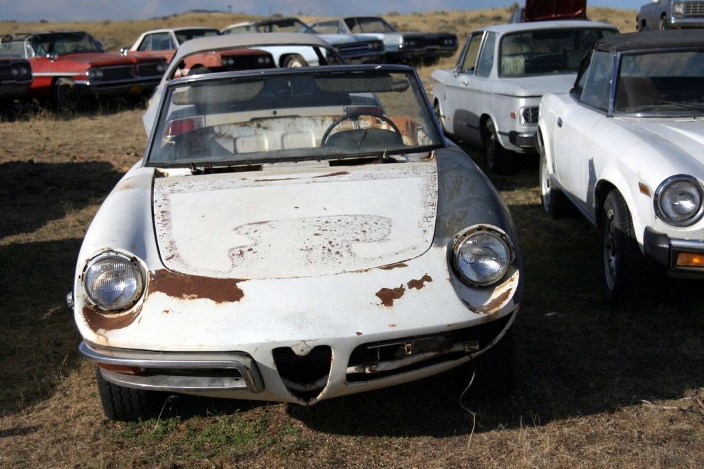 Alfaholics Group Buy Alfa Romeo Spiders - Classic alfa romeo spider for sale