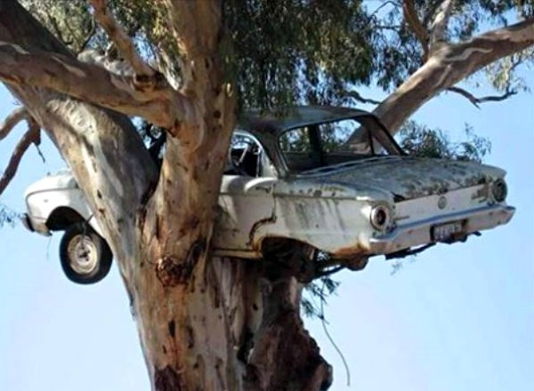 Ford Falcon Tree Find