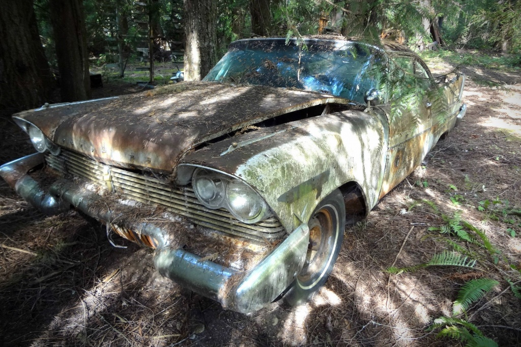 1957 Plymouth Fury: Bramble Beaten