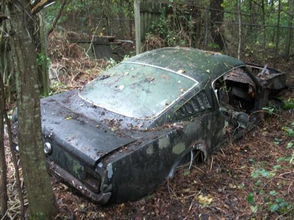 Forest Fastback Find