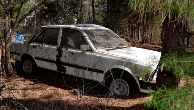 Trapped by Trees: 1981 Peugeot 505