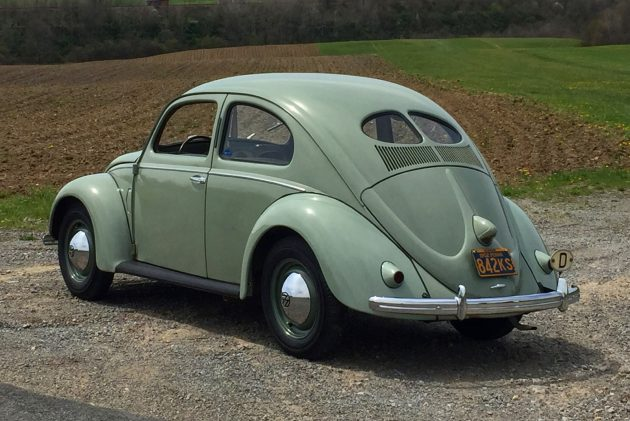 Success Story: Mike's Beetle Finds A Home!