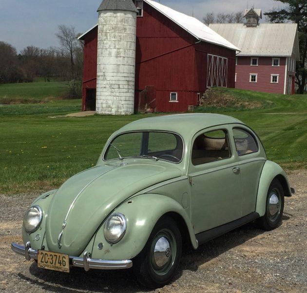 Barn Beetle