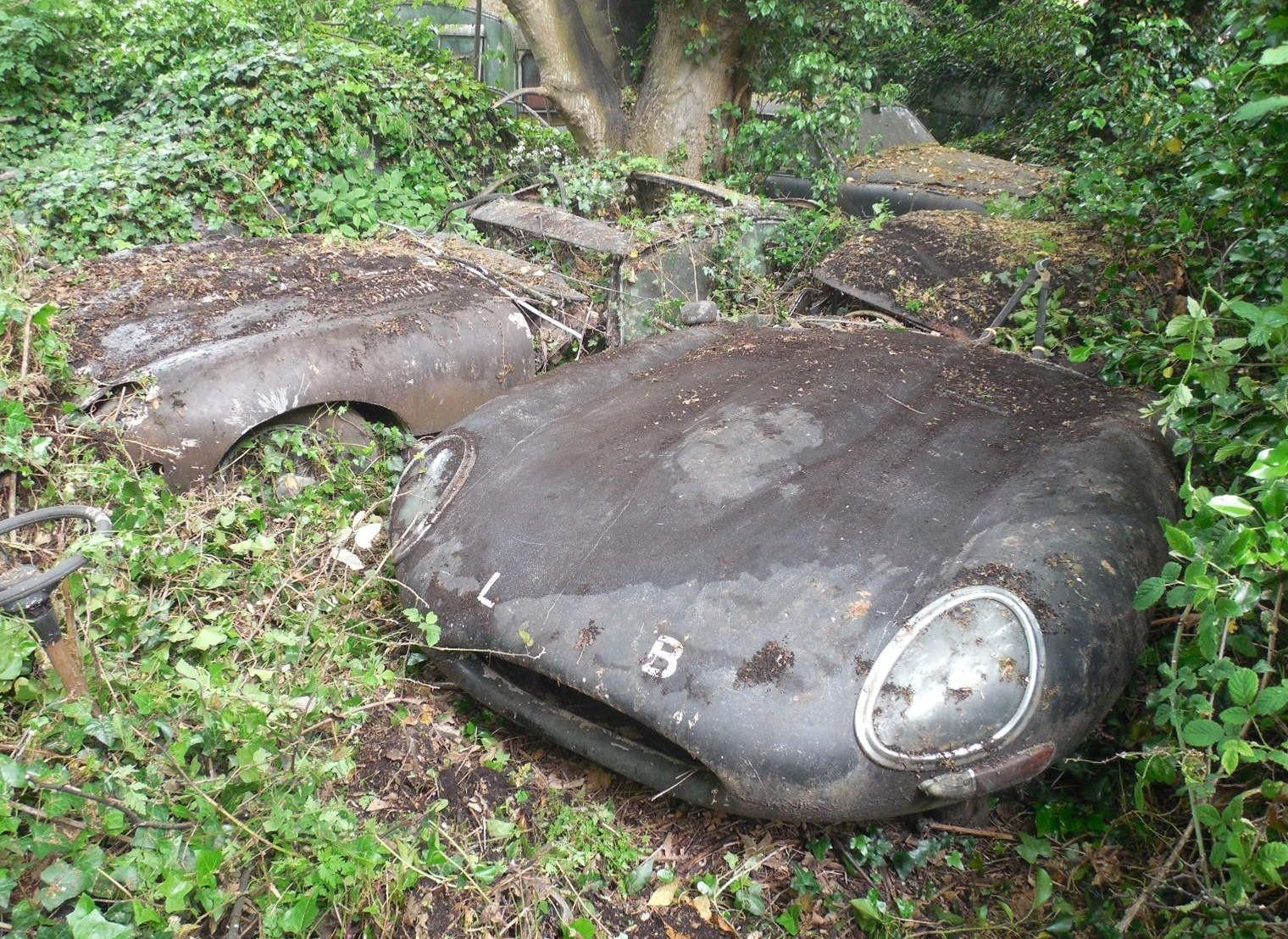 In the hedge pair of jaguar e types for Architect search