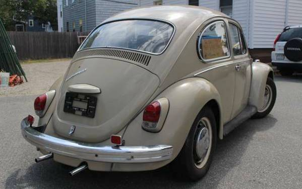 beetle-backside