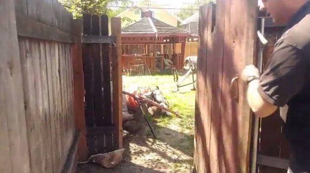 SNEAK PEEK: Amazing Backyard Find!
