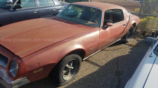 Sun Bleached! 1976 Pontiac Firebird