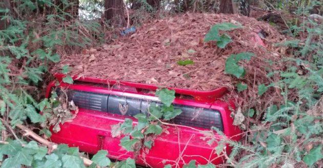 Under the Pines: 1988 Pontiac Trans Am GTA
