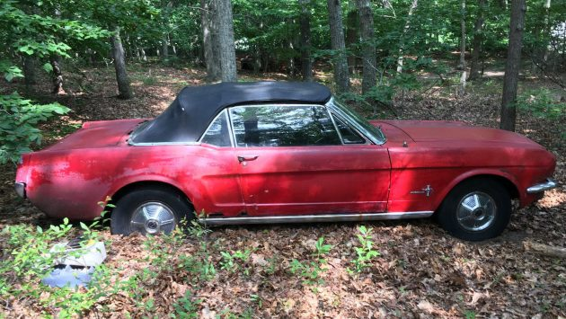 1964-1/2 Mustang Convertible Forest Find